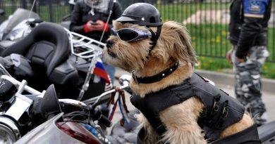 hoe-kan-de-hond-mee-op-de-motor
